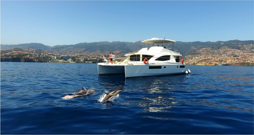 Vip Dolphins